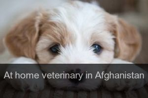 At home veterinary in Afghanistan