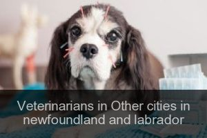 Veterinarians in Other cities in newfoundland and labrador
