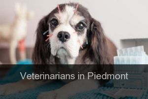 Veterinarians in Piedmont