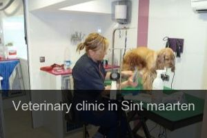 Veterinary clinic in Sint maarten