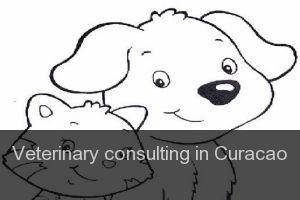 Veterinary consulting in Curacao