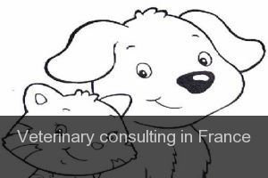 Veterinary consulting in France