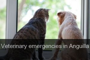 Veterinary emergencies in Anguilla