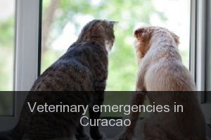 Veterinary emergencies in Curacao