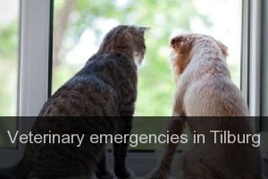 Veterinary emergencies in Tilburg
