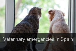 Veterinary emergencies in Spain